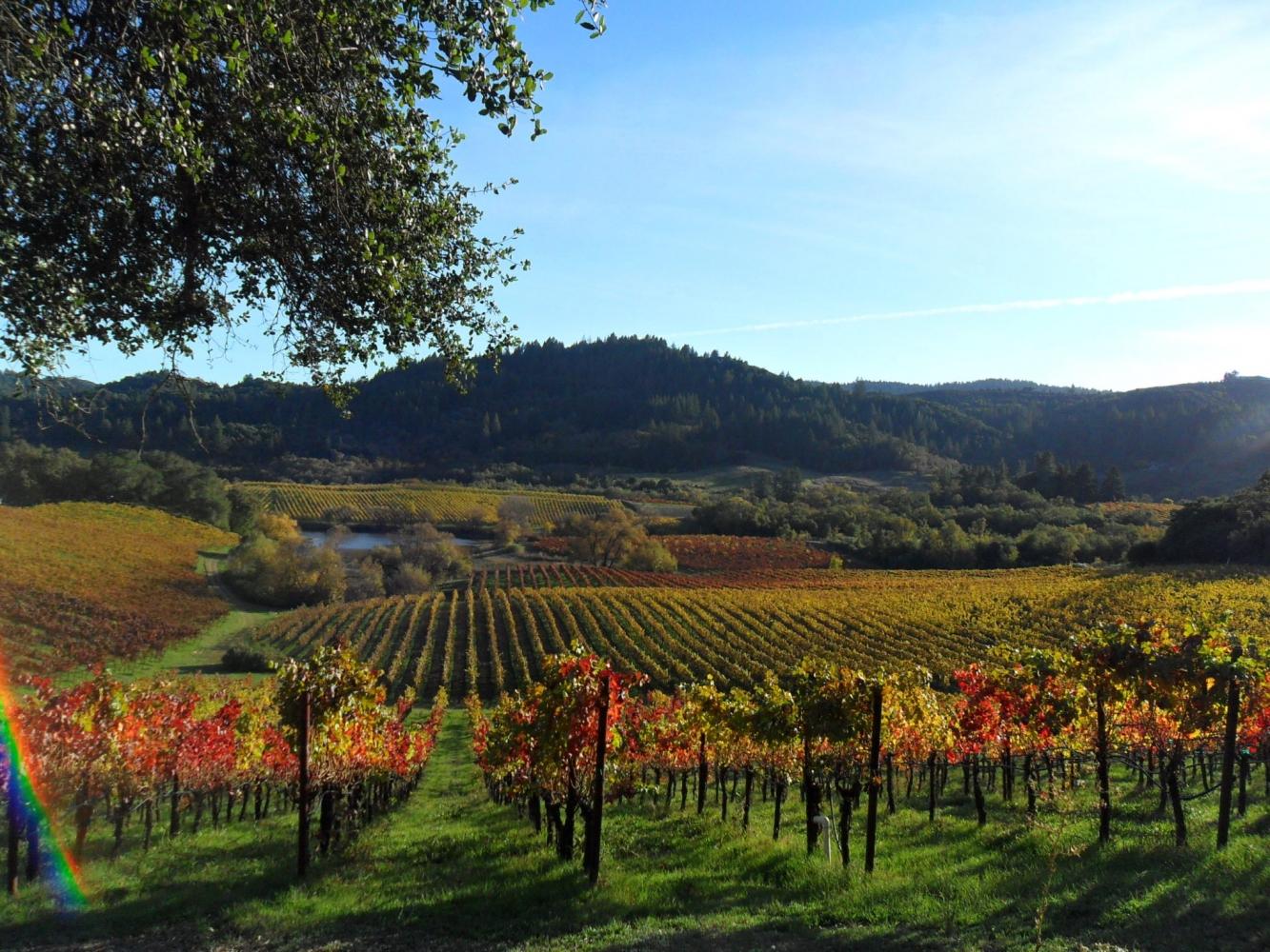 Sonoma County wine & walking tour
