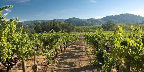 Sonoma County Vineyard Walk