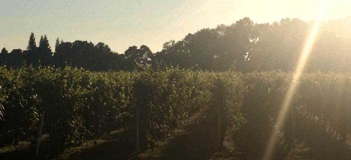 Lodi Vineyard - 5 myths about wine tours and why they are wrong
