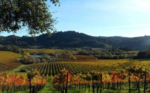 Sonoma Wine & Walking Tour
