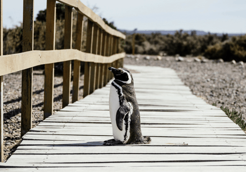 Penguin and whale watching - What To Do In Argentina