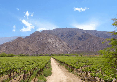 Cafayate - What To Do In Argentina