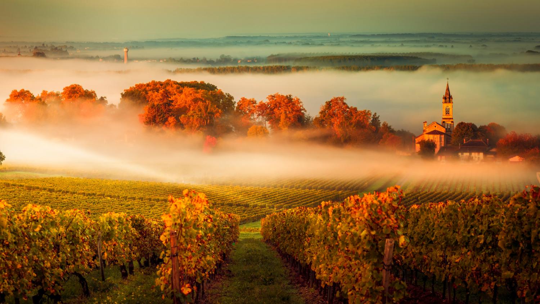 Bordeaux Food & Wine Tour